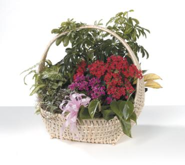 Mixed Basket of Green and Blooming plants