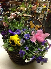 Mixed plant baskets